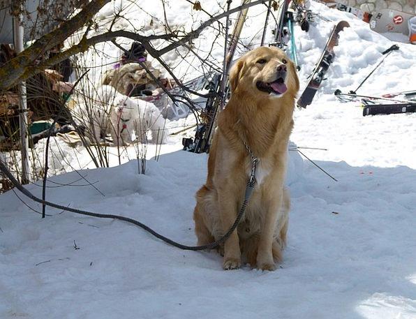 Dog Doglike Animal Physical Canine Pet Domesticate