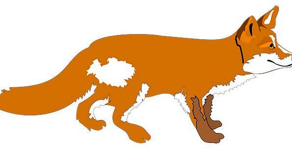 Fox Deceive Physical Wildlife Animal Wild-Animal M