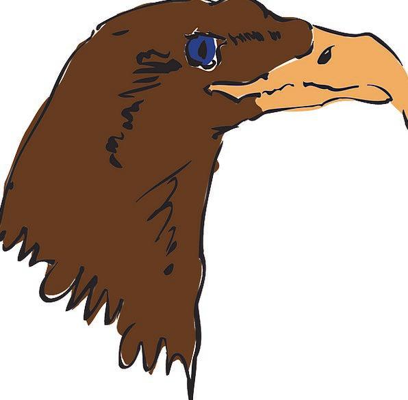 Eagle Skull Brown Chocolate Head Bird Fowl Beak Fe