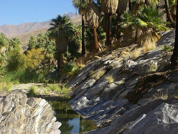 Palm Canyon Retreat California Oasis Palm Tree Des