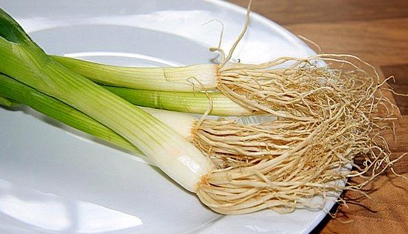 Spring Onion Drink Food Onions Leek Food Nourishme