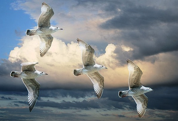 Gull Birds Natures Sea Gull Sky Blue Clouds Blue S