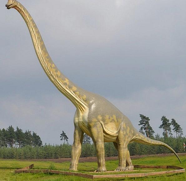 Dinosaur Relic Sauropods Brontosaurus Apatosaurus
