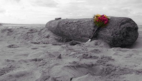 Driftwood Flotsam Vacation Seashore Travel Ocean M
