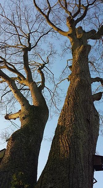 Winter Sun Artistic Tree Sapling Aesthetic Kahl