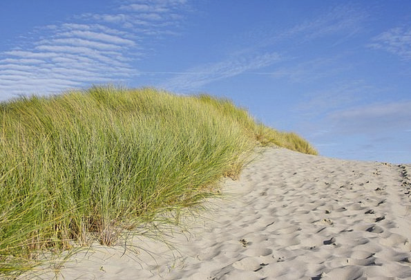 Beach Seashore Vacation Bank Travel Grass Lawn Dun