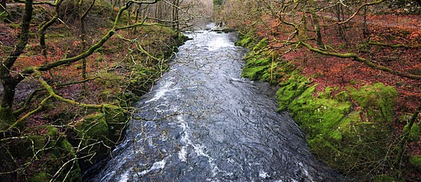 Stream Watercourse Landscapes Woodland Nature Wate