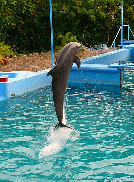Dolphin Demonstration Jumping Hopping Show Sea Poo