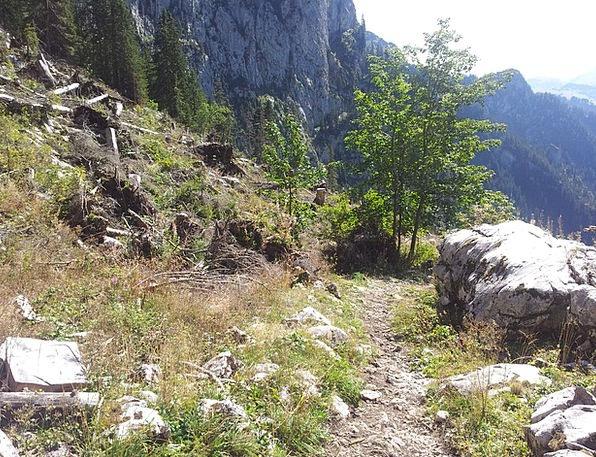 Switzerland Walop Simmental Trail Track Lothar Win