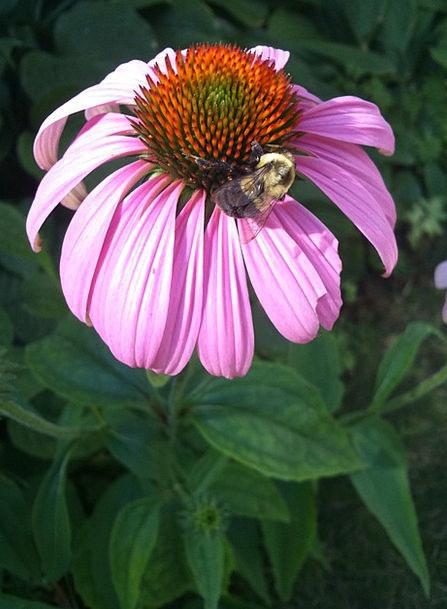 Flower Floret Landscapes Nature Bee Flowers Herb B