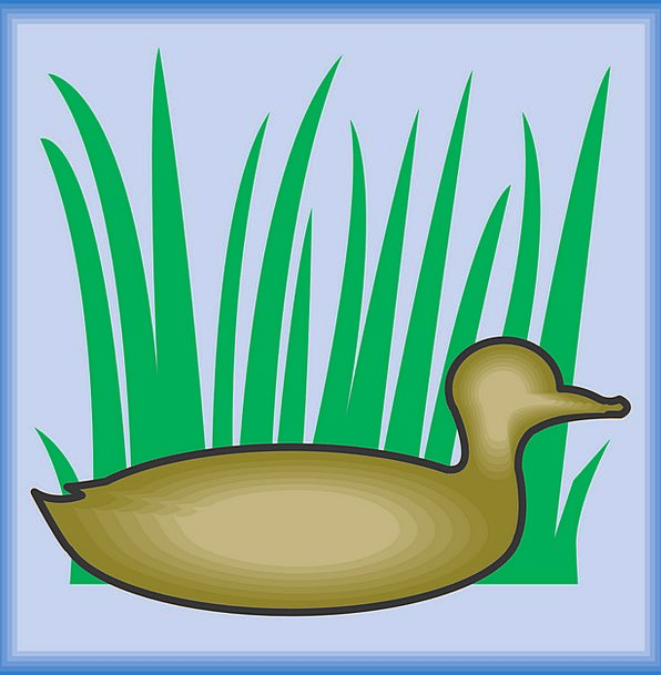 Bird Fowl Outline Grass Lawn Silhouette Wings Anne