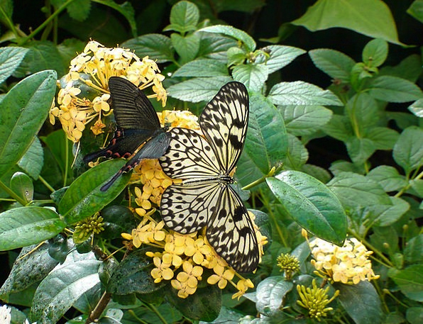 Butterfly Landscapes Plants Nature Nature Countrys
