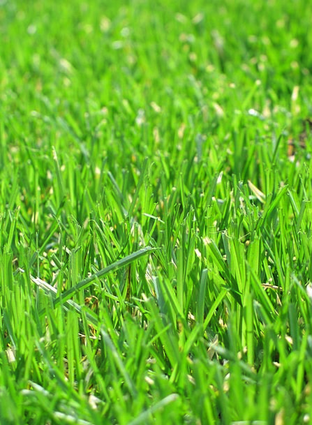 Grass Lime Lawn Green Sunny Mow Cut Pasture Growth