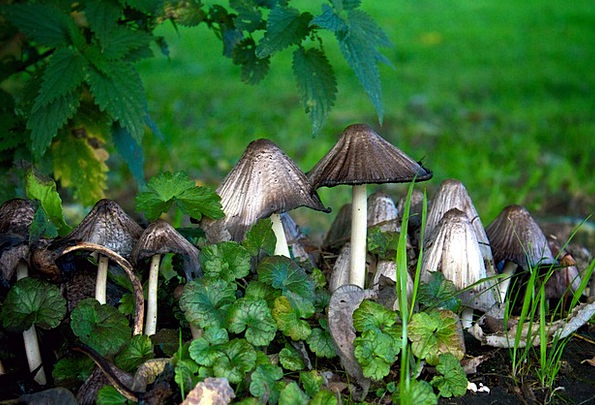 Mushrooms Burgeons Landscapes Wildflower Nature St