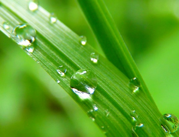 Drop Of Water Landscapes Drop Nature Close Near Dr
