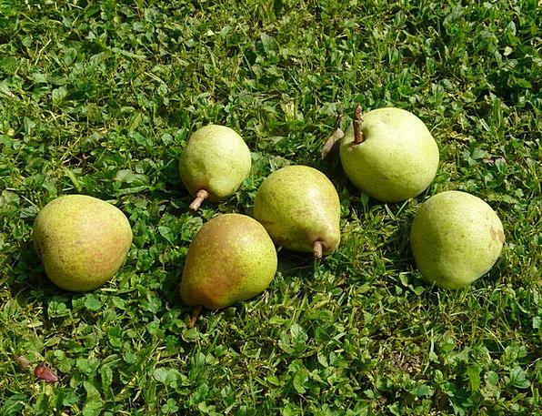 Pears Drink Field Food Harvest Crop Meadow Delicio