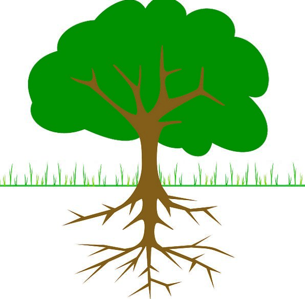 Tree Sapling Landscapes Twigs Nature Root Origin B