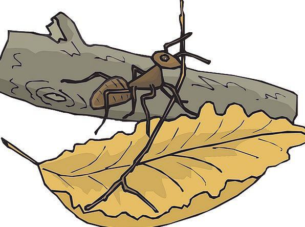 Leaf Foliage Division Ant Branch Log Record Insect