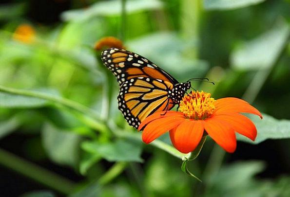 Animal Physical Lovely Monarch Ruler Beautiful Mac