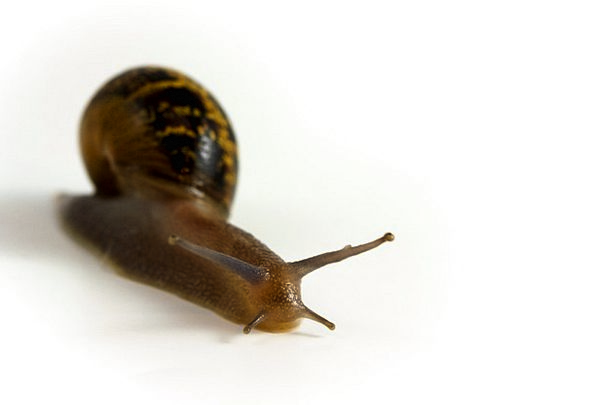 Snail Physical Slug Bullet Animal Slow Mollusk Env