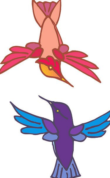 Two Binary Natures Flying Hovering Birds Colors In