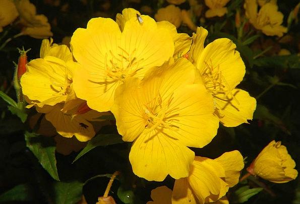 Flowers Plants Near Yellow Creamy Close Colorful I