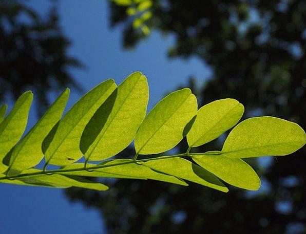 Journal Periodical Lime Leaf Veins Green Dark Gree