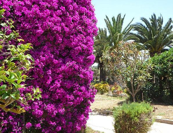 Mediterranean Landscapes Plot Nature Summer Straw-