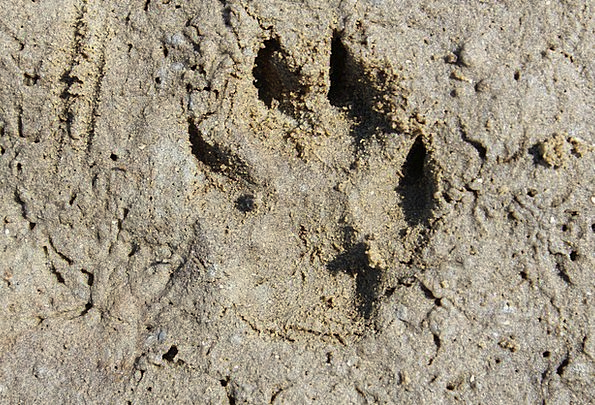 Trace Suggestion Vacation Footmark Travel Dog Trac