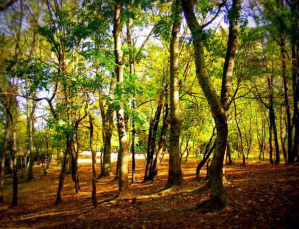 Autumn Fall Landscapes Woodland Nature Colors Insi