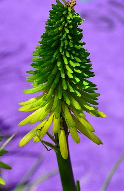 Flower Floret Landscapes Elaborate Nature Plant Ve