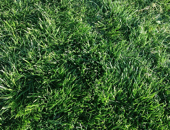 Green Lime Landscapes Lawn Nature Field Arena Gras