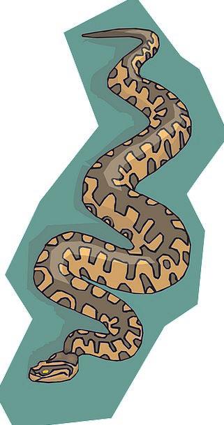 Snake Serpent Textures Chocolate Backgrounds Backg