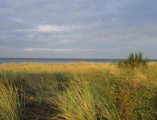 Dune Bank Sea Marine Baltic Sea Dune Grass Sky Coa
