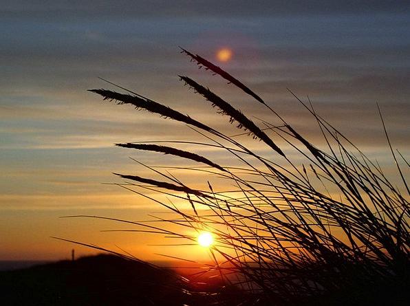 Sun Lawn Dune Bank Grass Denmark Sky North Blue No