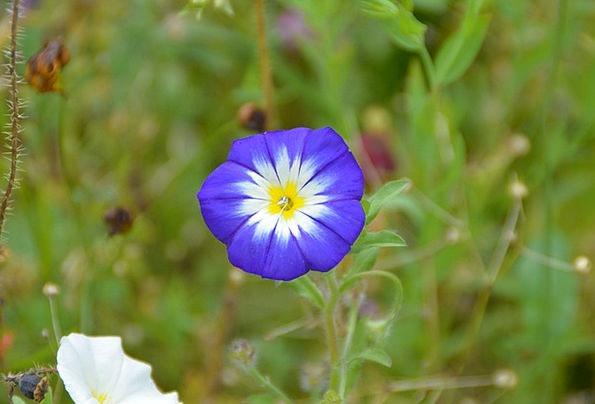 Vetch Azure Flower Floret Blue Garden Plot Flower