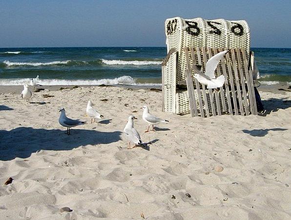 Baltic Sea Vacation Travel Coast Shore Gulls Sea M