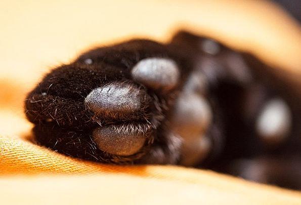 Cat Feline Paw Print Cat'S Paw Adidas Paws Hands F