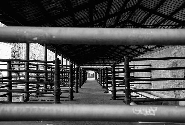 Slaughterhouse Abattoir Days Gone By Former times