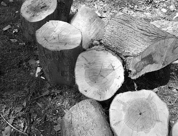 Wood Timber Landscapes Woods Nature Black Dark Log