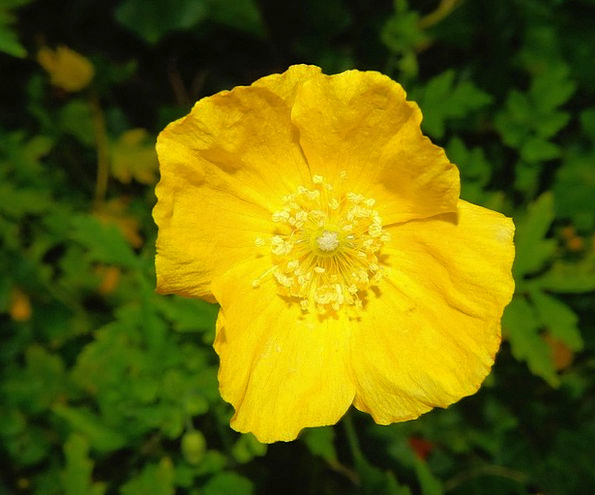 Flower Floret Cheerful Close Up View Yellow Bright