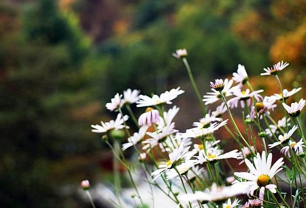Flowers Plants Flower Gardens White Flower