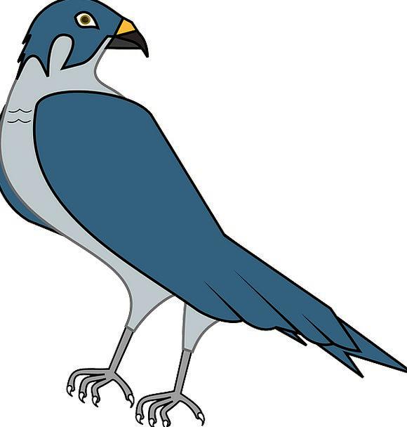 Hawk Warmonger Fowl Falcon Bird Hunter Predator Fr
