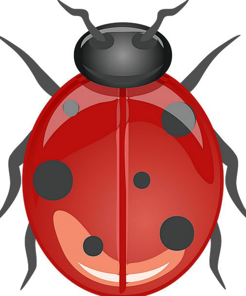 Ladybug Lucky Ladybug Beetle Crawl Animal Physical