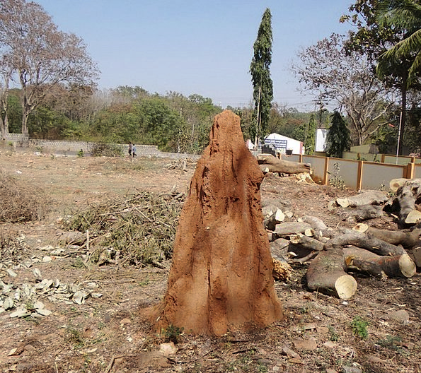 Termite Hill Mound Knoll Termites Anthill Dharwad