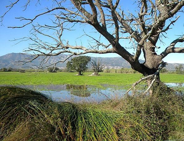 Aiguamolls Swamps Castelló D' Empúries Wetlands Al
