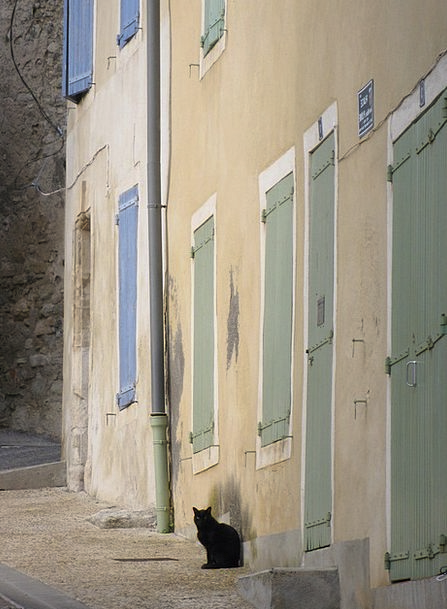 Provence Community Cat Feline Village Homes Famili
