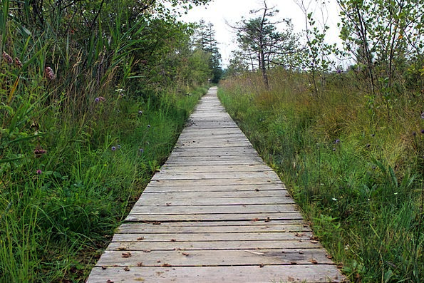 Wooden Track Landscapes Countryside Nature Away Ab