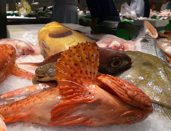 Fish Market Drink Angle Food Food Nourishment Fish