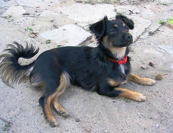 Dog Canine Dark Placed Located Black